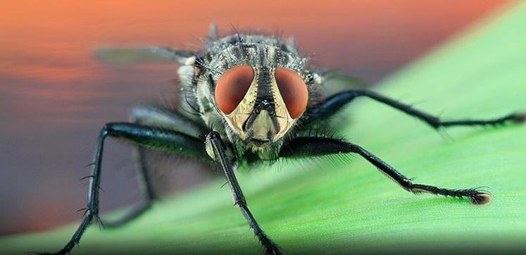public health pest control manual