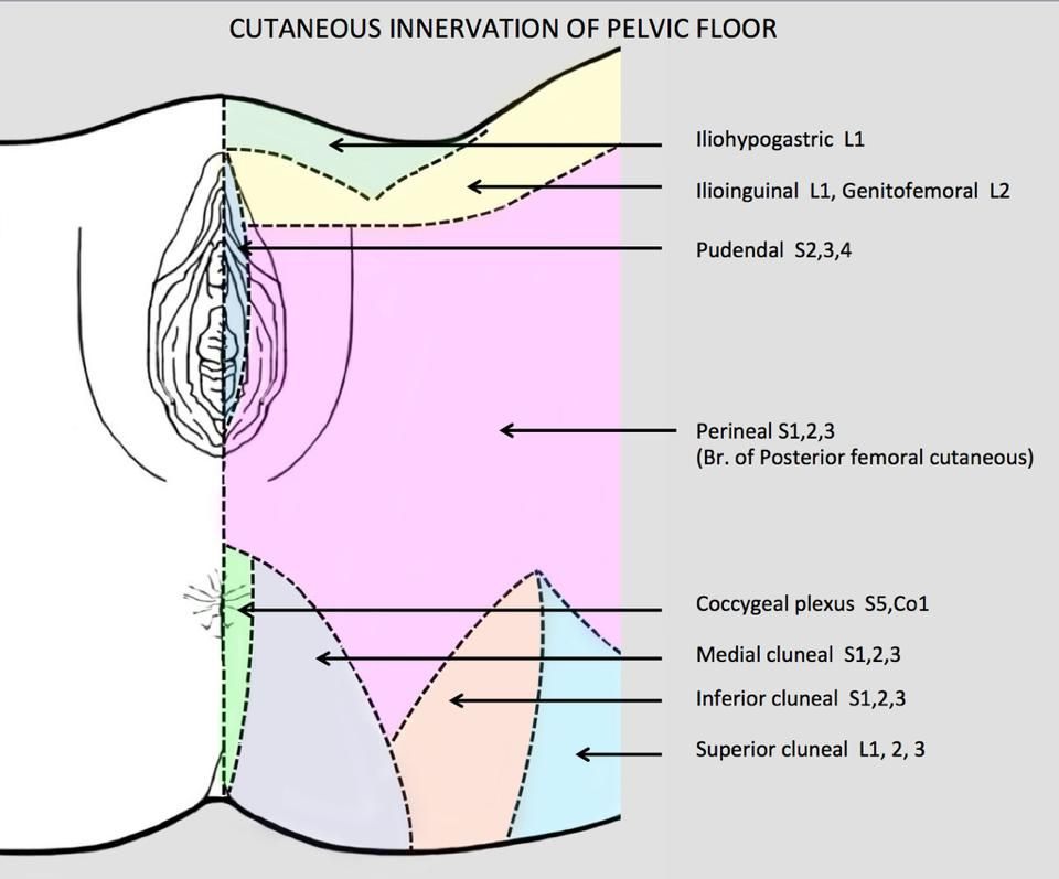 manual stimulation of the genitalia