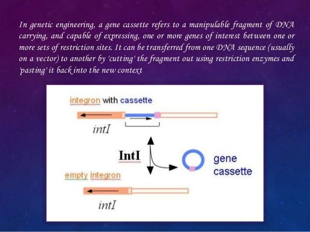 molecular cloning a laboratory manual 2nd edition pdf